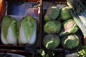 大玉の白菜とキャベツ。