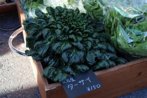 珍しい野菜「ターサイ」。