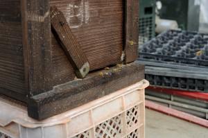 ミツバチの巣箱。