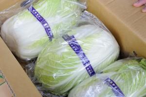 梱包された白菜。