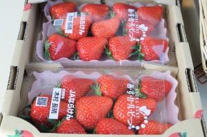 奈良県産の美味しい採れたて苺。
