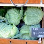 ロハスカフェさんの奈良県産のお野菜(おおきなキャベツ)