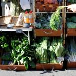 ロハスカフェさんの奈良県産の野菜たち